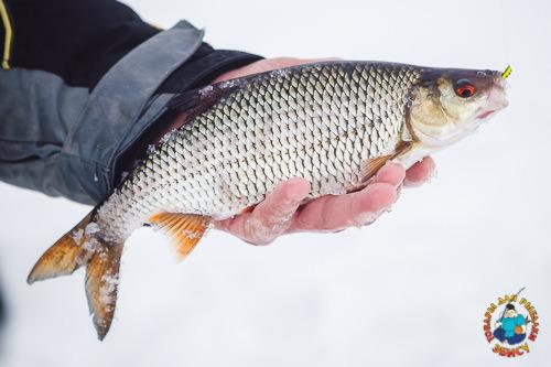 мормыш для рыбалки купить