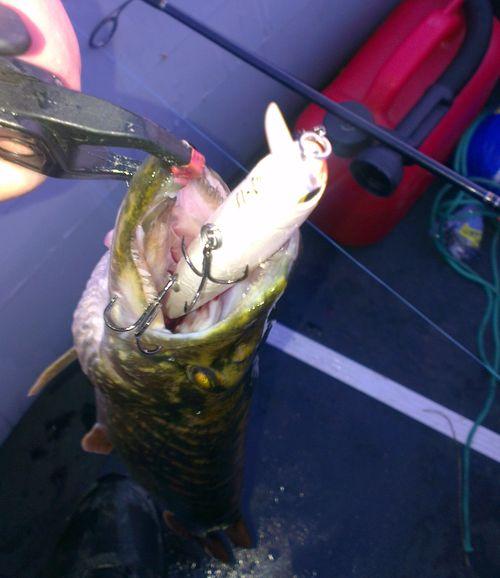 катапульта для рыбалки своими руками видео