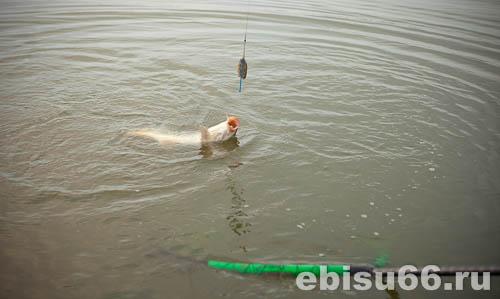 ловля на флэт весной